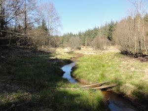 FOTO 13.2 Tornby klitplantage Horsebækken