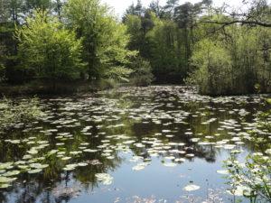 Uggerby Plantage - Skovsøerne