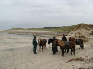 Heste og ryttere på rideruten ved Liver Å's udløb